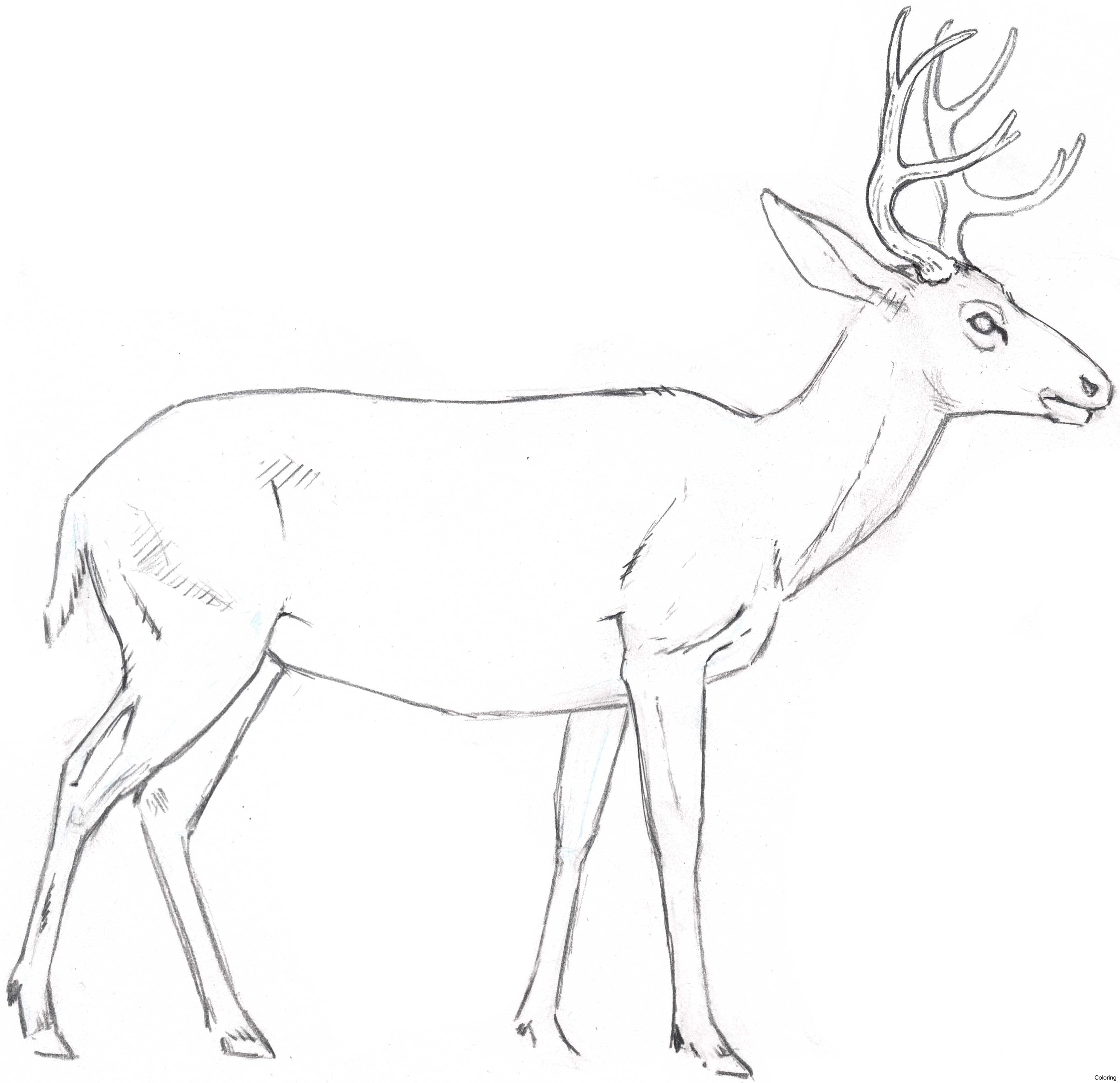 deer drinking water drawing at getdrawings com