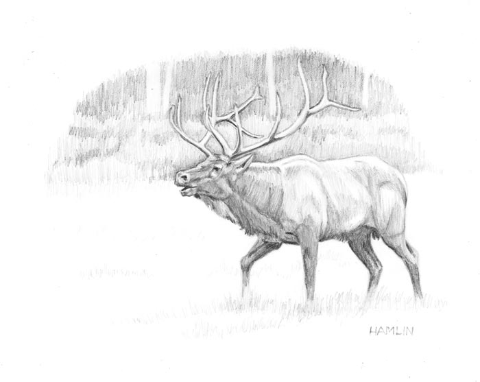 Line Drawing Deer : Deer ink tumblr