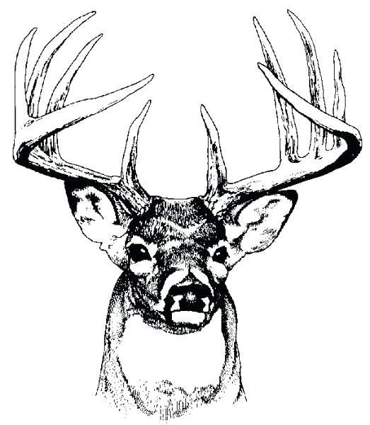 523x600 Deer Head Coloring Pages Deer Head Outline Printable Sketch