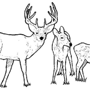 Deer Family Drawing At Getdrawings Com Free For Personal Use Deer Squirrel  Family Coloring Pages Reindeer Family Coloring Pages