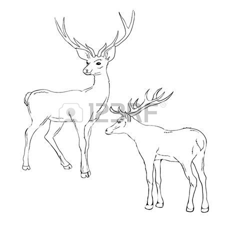 450x450 69 Buck Rut Cliparts, Stock Vector And Royalty Free Buck Rut