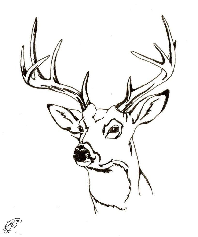 Deer Head Drawing at GetDrawings