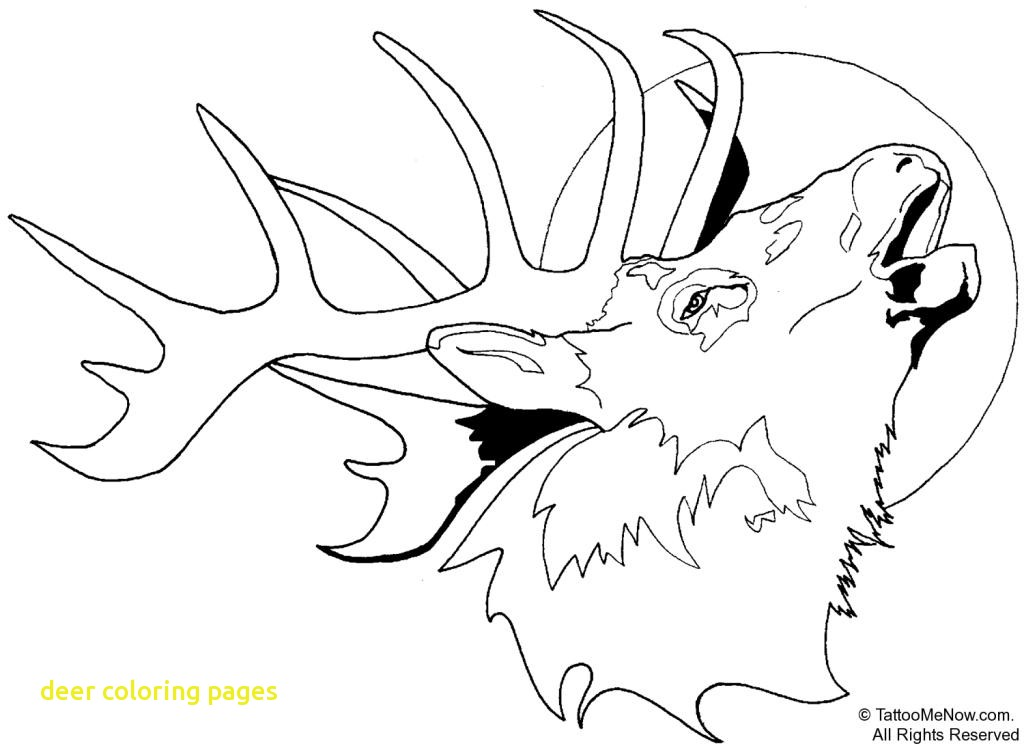 1024x748 Deer Coloring Pages With Pinterest Tumblr