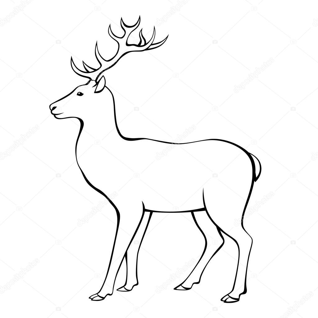 Unique Axis Deer Anatomy Composition - Human Anatomy Images ...