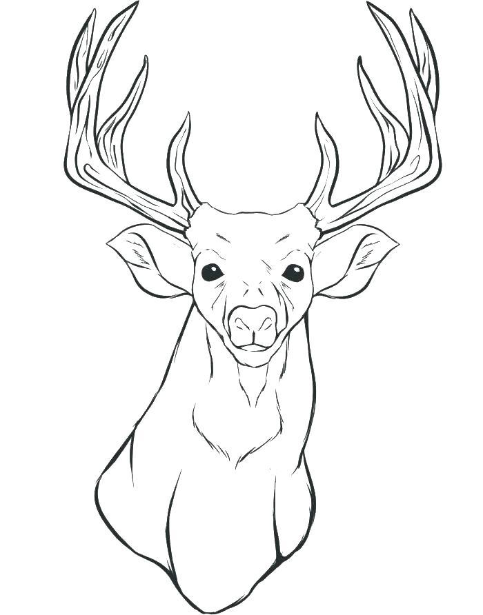 Deer Horn Drawing at GetDrawings | Free download