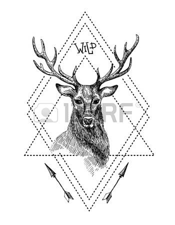 350x450 Drawn Deer Majestic
