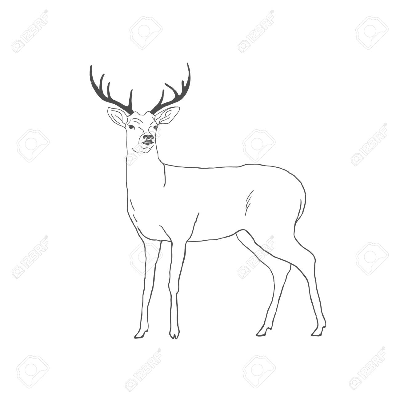 1300x1300 Hand Drawn Deer Isolated On White Background. Vector Illustration