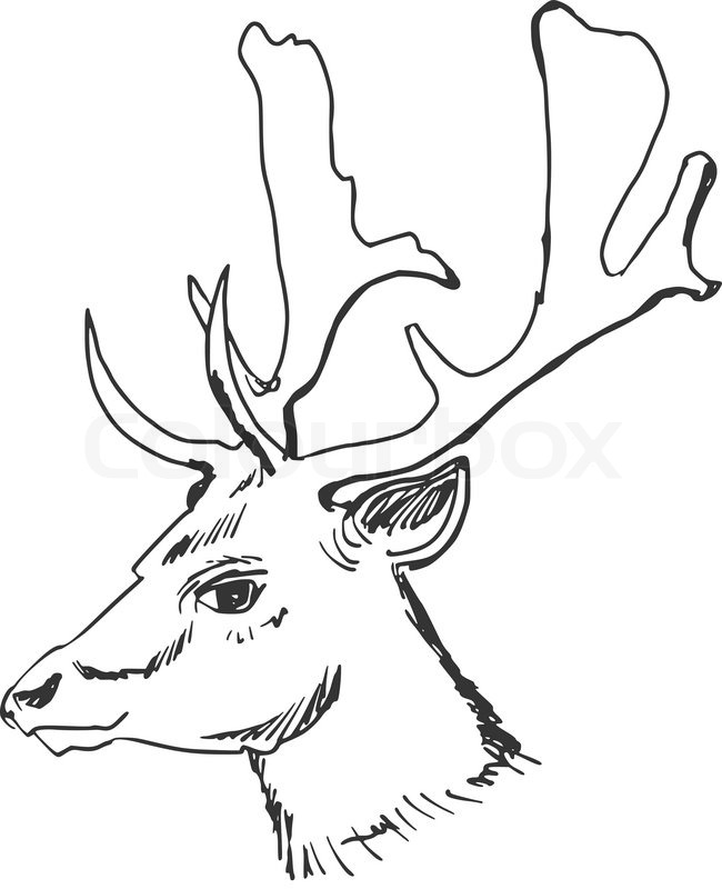 650x800 Hand Drawn, Sketch, Cartoon Illustration Of Deer Stock Vector