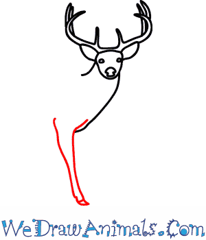 300x350 How To Draw A Buck Deer