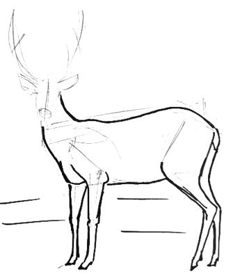 335x400 How To Draw A Deer