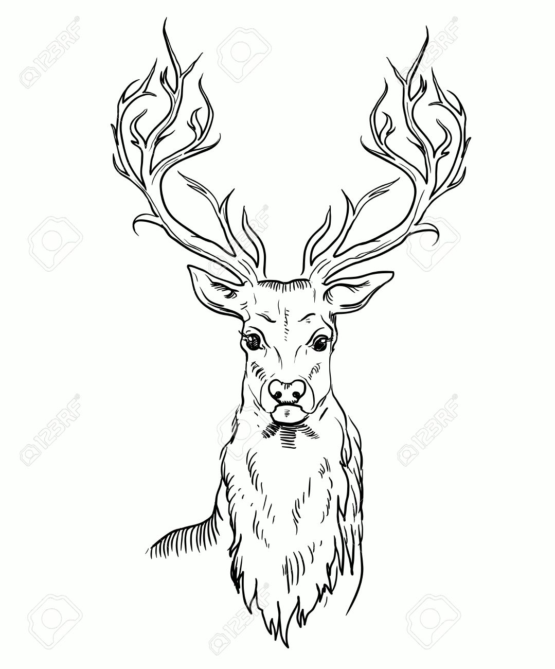 1079x1300 Sketch Of Deer Head. Royalty Free Cliparts, Vectors, And Stock