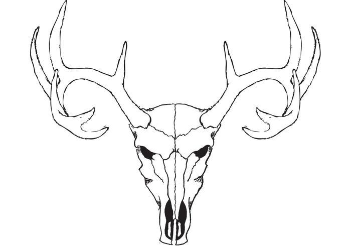 700x490 Deer Skull Vector