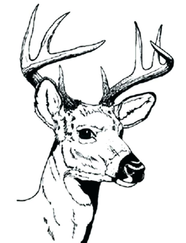 618x805 Deer Hunting Coloring Pages