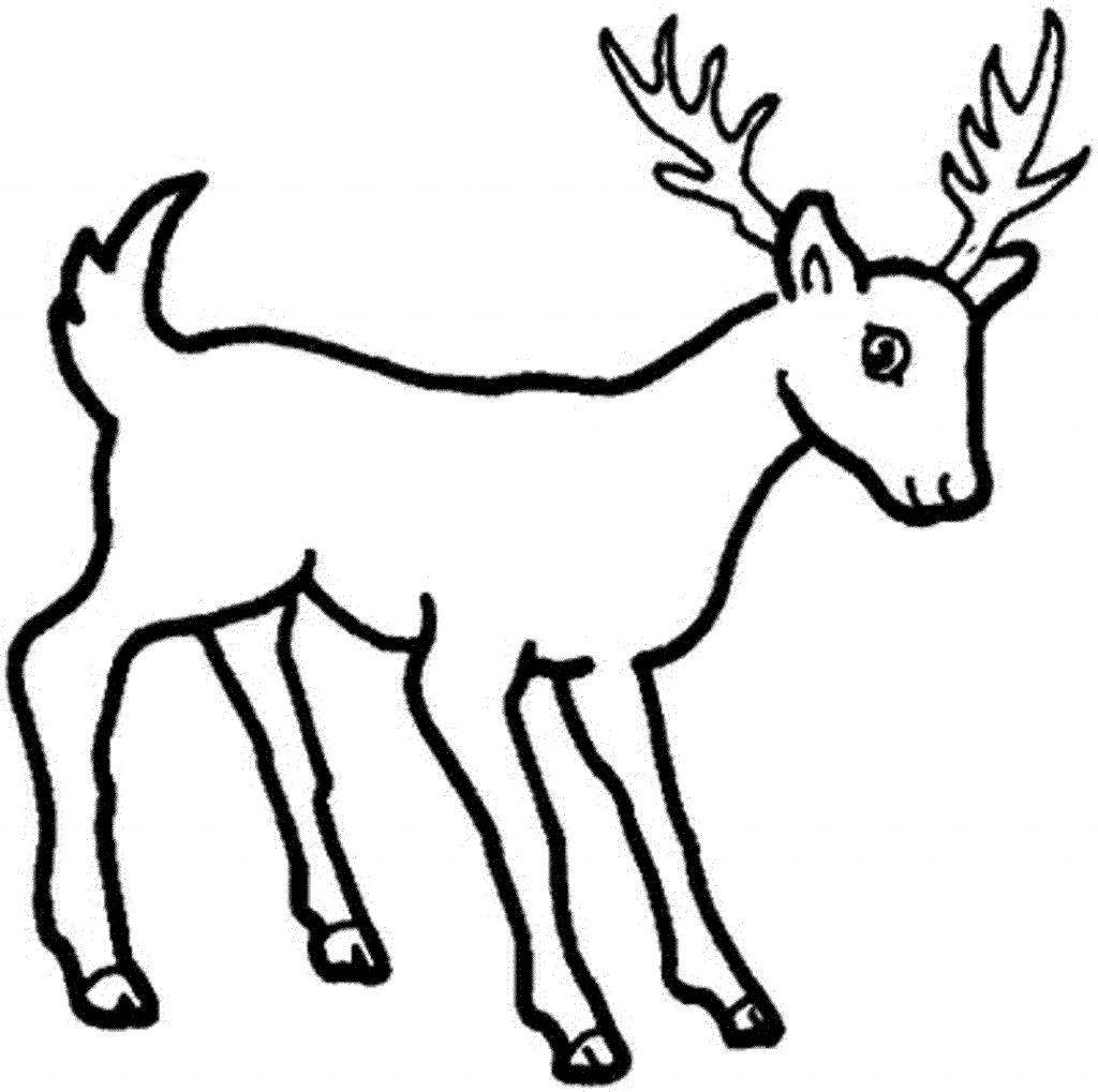 1024x1019 How To Draw A Deer For Kids Deer Coloring Sheets, Deer In Forest