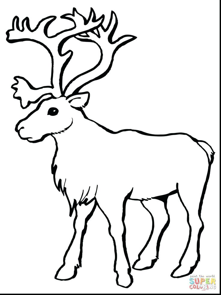 736x981 Deer Head Coloring Pages Also