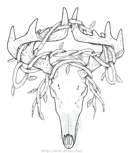 429x500 Deer Head Coloring Pages How To Draw A Deer Skull Deer Skull