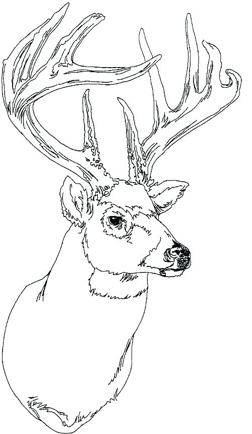 500x860 Deer Head Silhouette Coloring Sheets Big Deer Head Coloring Sheets