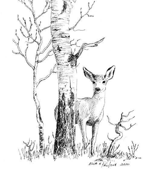 Deer Pencil Drawing