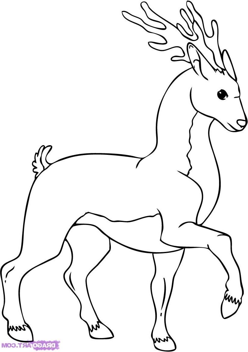 821x1164 Deer Drawing Cartoon Photo