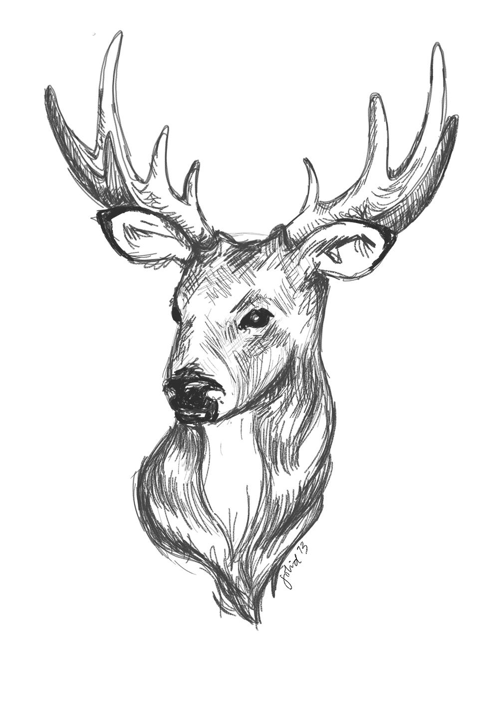 1000x1415 Deer Drawing