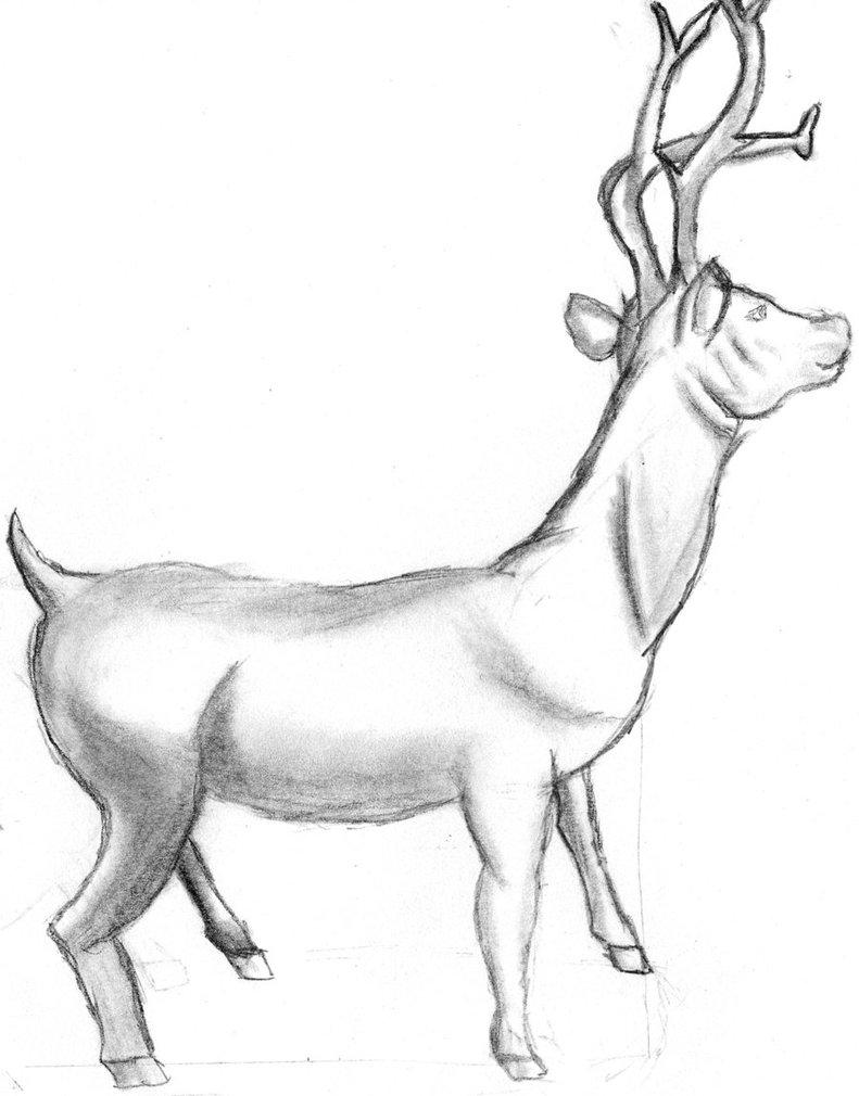 791x1010 Animal Drawing