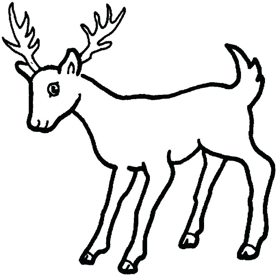deer picture drawing at getdrawings com free for personal use deer