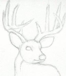 261x302 How To Draw A Deer Head, Buck, Dear Head Step 3 Drawing Ideas