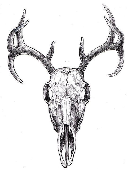 541x720 Deer Skull Drawing With Flowers