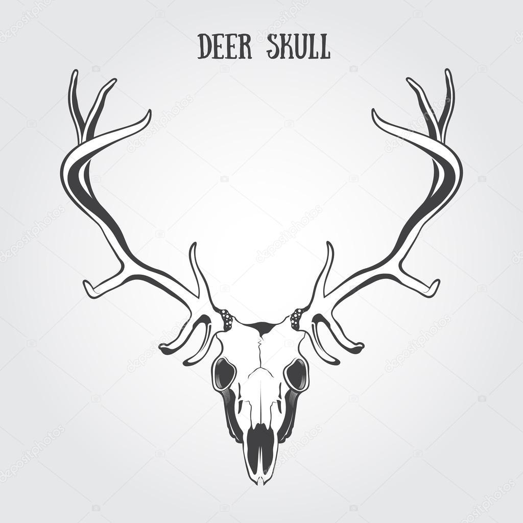1024x1024 Deer Skull Stock Vector Bienchen