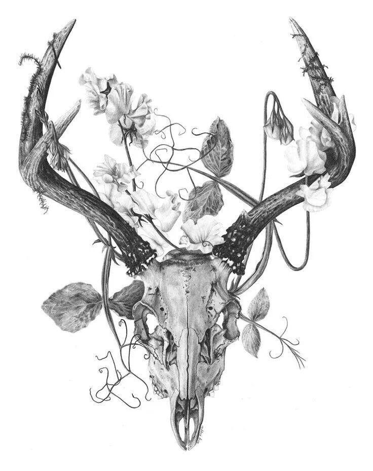 736x928 Drawing Skulls And Bone Antlers, Tattoo And Tatting