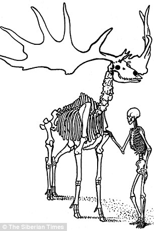 306x459 Giant Prehistoric Irish Elk Lived 2,000 Years After