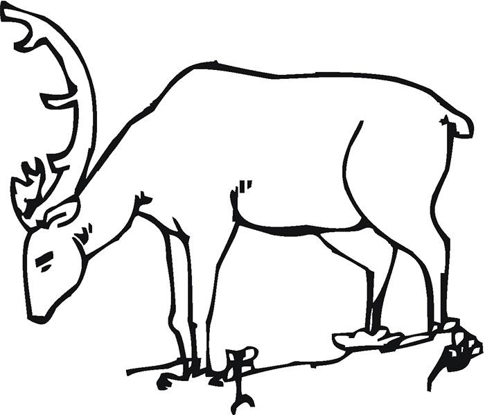 700x599 Deer Templates