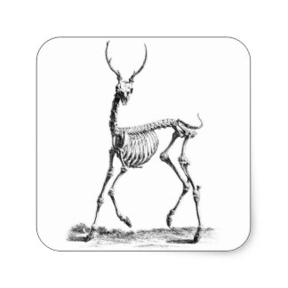324x324 A Black And White Deer Stickers Zazzle