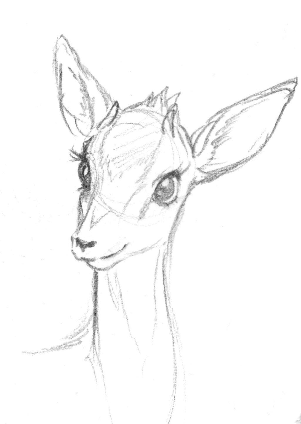 Deer Sketch Drawing