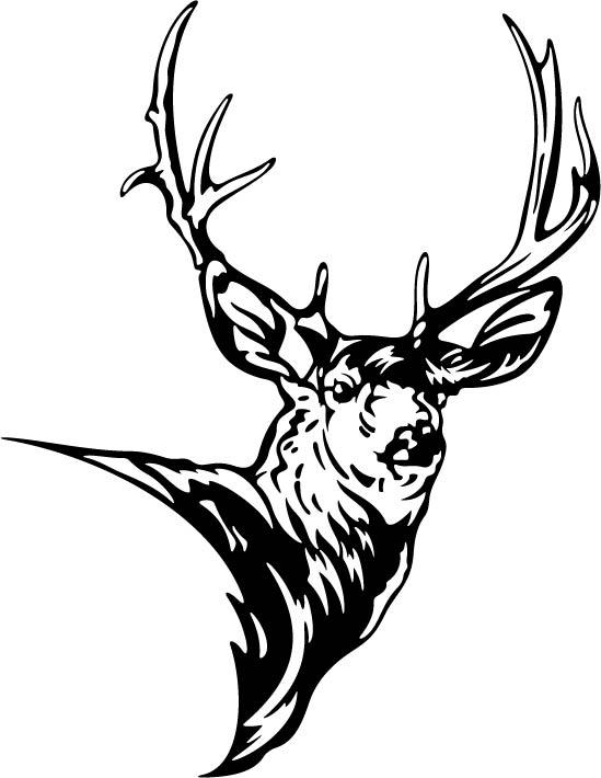 549x710 Head Clipart Mule Deer