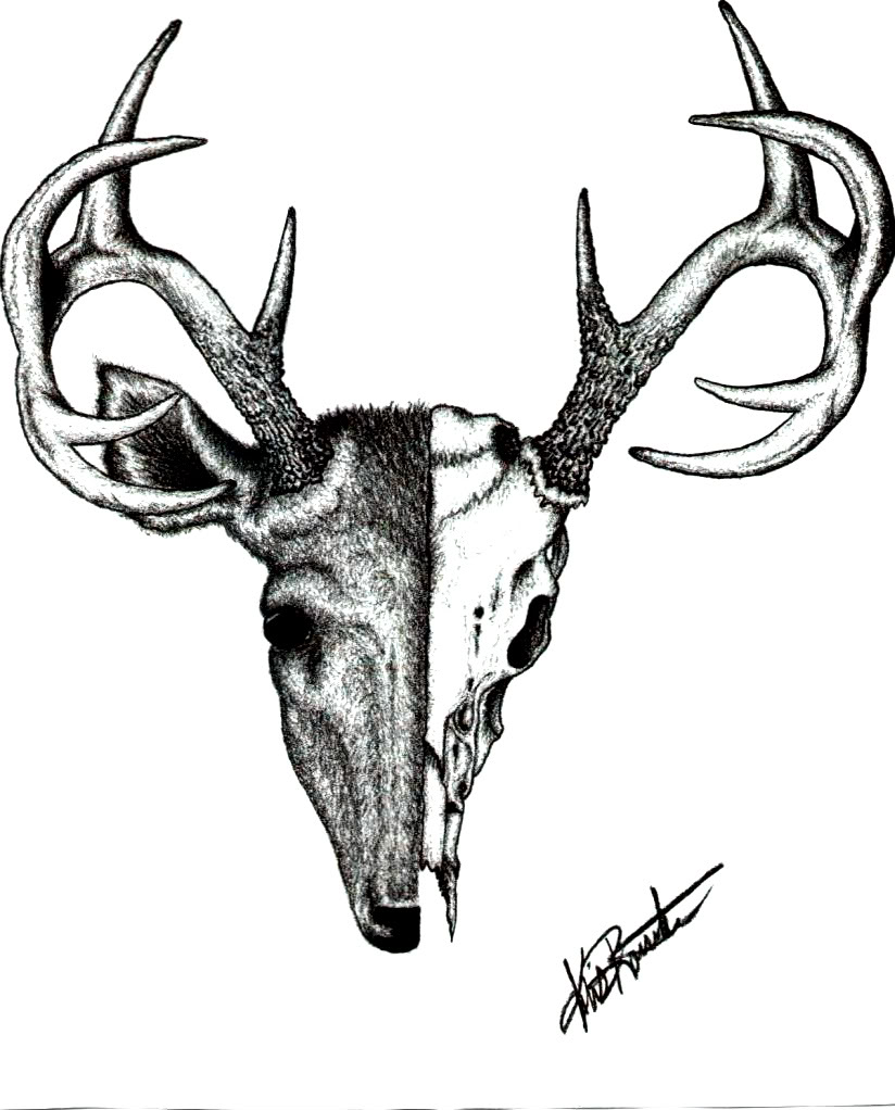 824x1022 Whitetail Deer Antlers Clipart