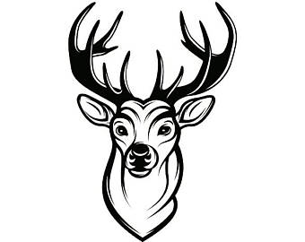 340x270 Deer 1 Buck Antlers Points Whitetail Fawn Hunting Hunt Game