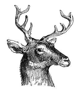 258x300 Deer Antlers Paintings