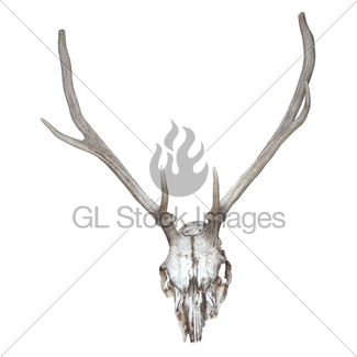325x325 Whitetail Deer European Mount Skull And Antlers Illustration Gl