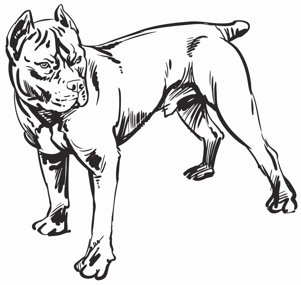 1235x1173 Hand Drawing Pitbull Demon Dog Imp Printable Image Illustration