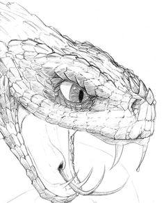 236x292 Snake Eye Drawing