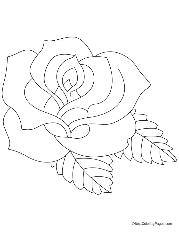738x954 Ideal Rose Coloring Pages Print Coloring