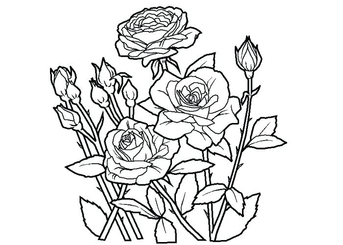 700x500 Rose Coloring Page Best Coloring Pages