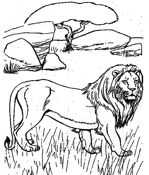 510x600 Desert Animal Coloring Pages Desert Coloring Pages Camel Two Camel