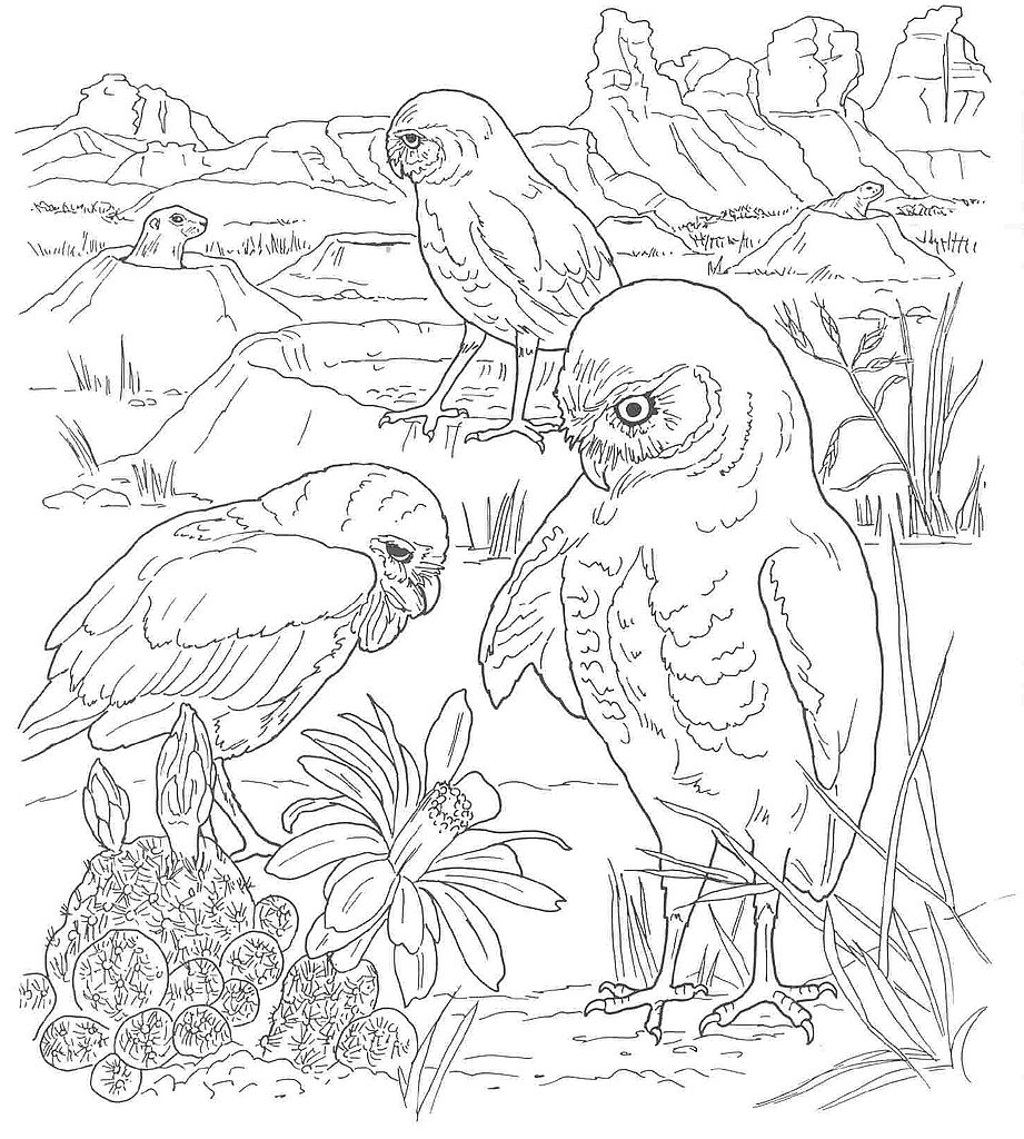 921x1024 Desert Animals Coloring Pages