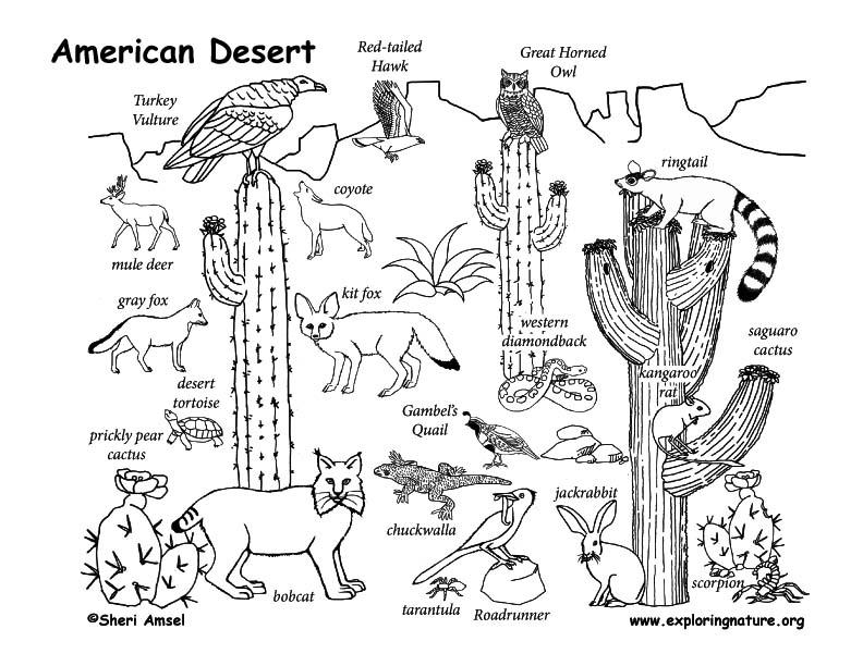 792x612 Draw An American Desert