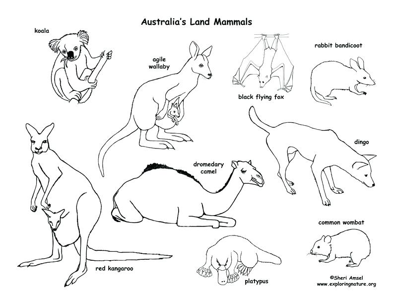 792x612 A Line Drawing Of Lizard Astounding Desert Animals Coloring Pages