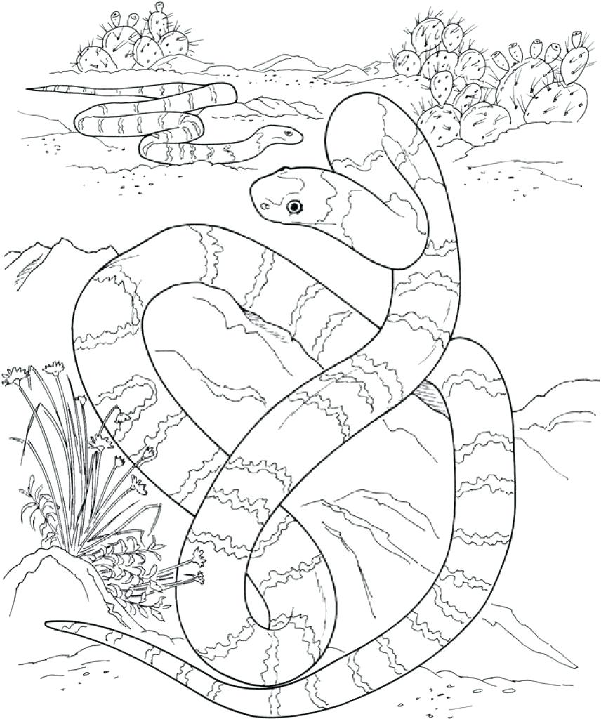856x1024 Coloring Desert Animals Coloring Pages Monster Page Sonoran