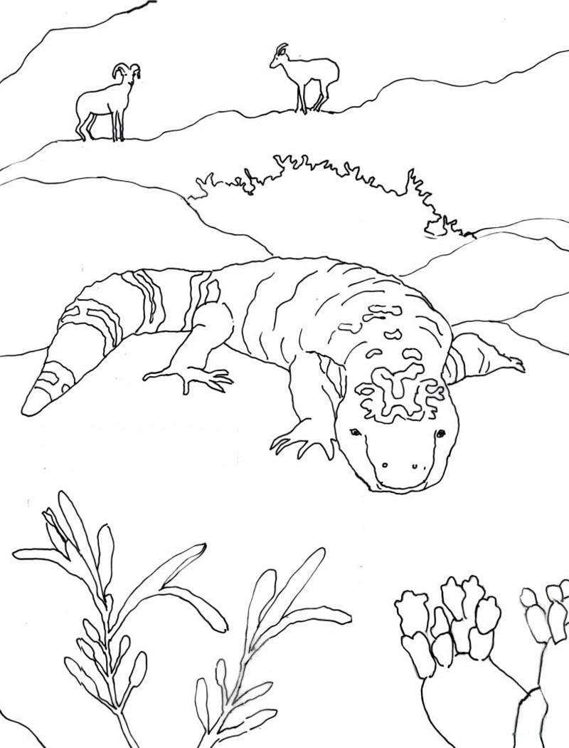 Desert Animals Drawing at GetDrawings | Free download