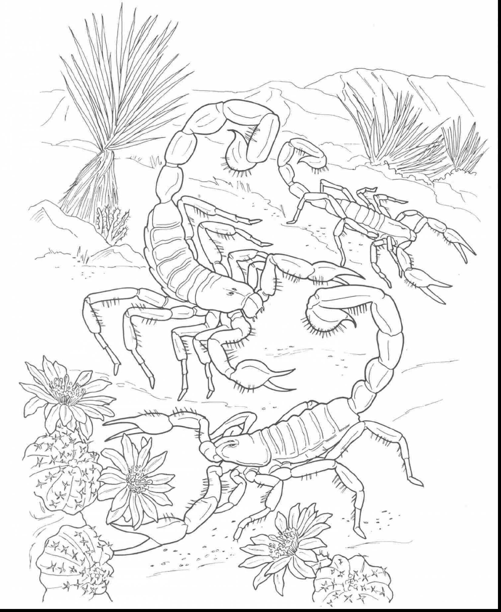 1650x2017 Desert Animal Coloring Pages